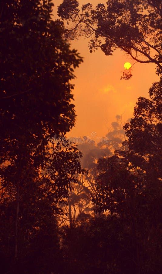 Australien: En buskebrand i Queensland arkivbild