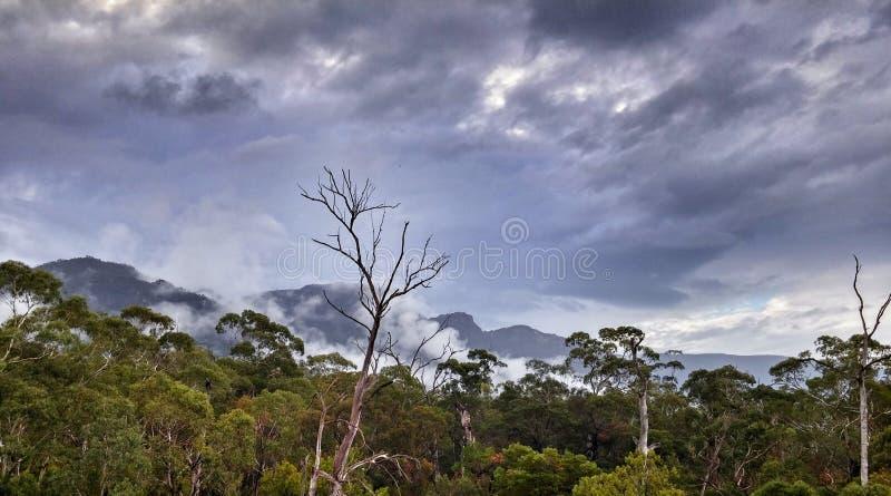 Australien forest in the Grampians. Beautiful green forest in the Grampians mountains in Australia stock photos