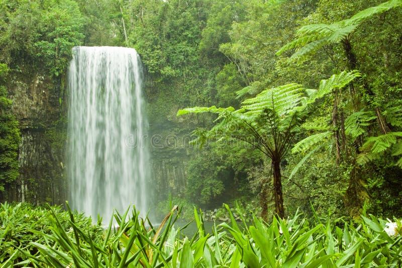 Australien härlig tropisk vattenfall royaltyfri bild