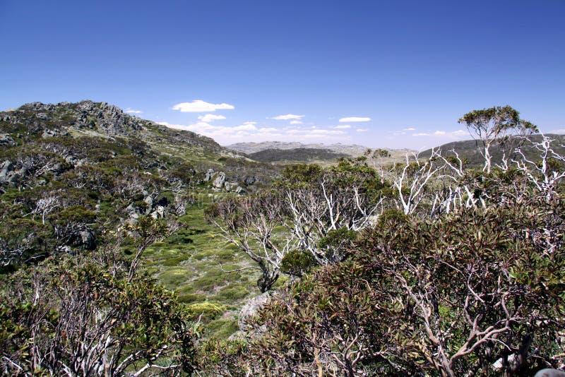 Australien kosciuskonationalpark arkivbilder