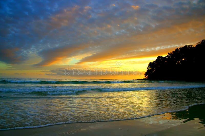 Australien kustsolsken royaltyfri fotografi