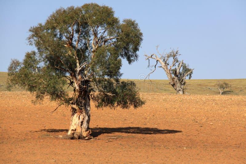 Australien land arkivfoto