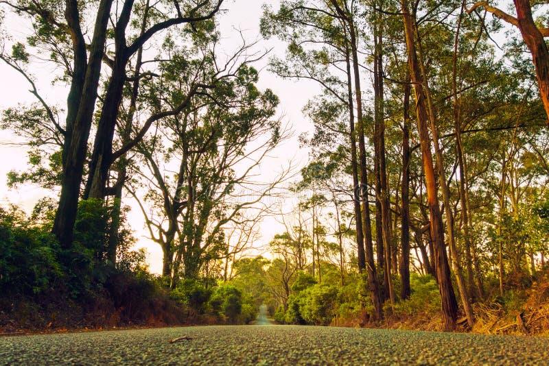 Australien landsväg fotografering för bildbyråer