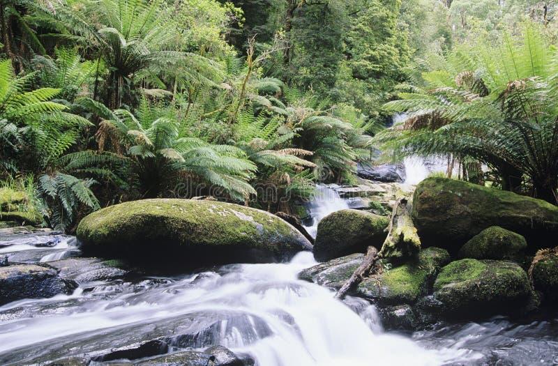 Australien Queensland ström i rainforest arkivfoto