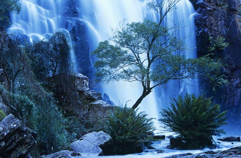 Australien vattenfall i skog arkivbild