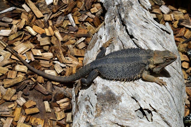 Australien, Zoologie lizenzfreies stockfoto