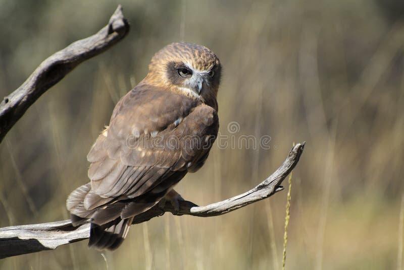 Australien, Zoologie lizenzfreie stockbilder