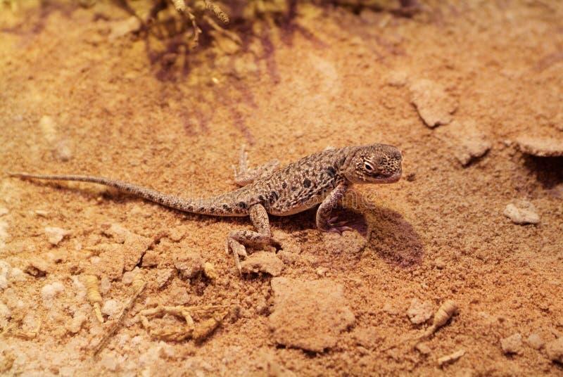 Australien, Zoologie stockbilder