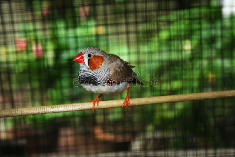 Finches royaltyfri fotografi