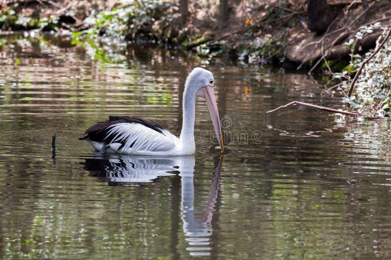 australiensisk park royaltyfri fotografi