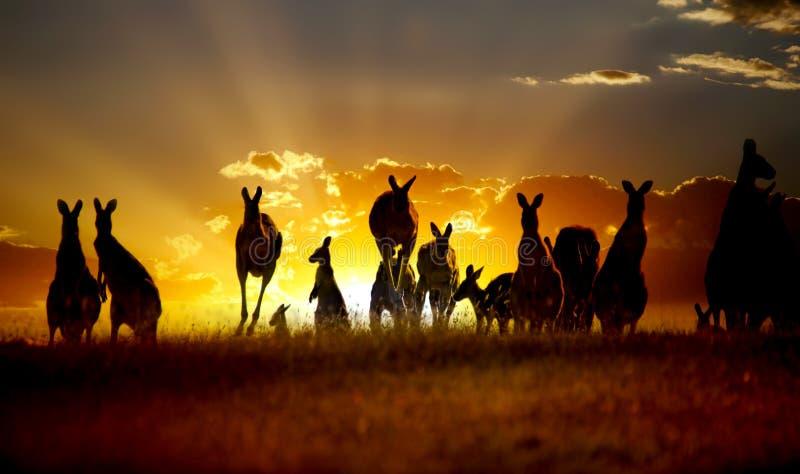 australiensisk solnedgång för känguru outback stock illustrationer