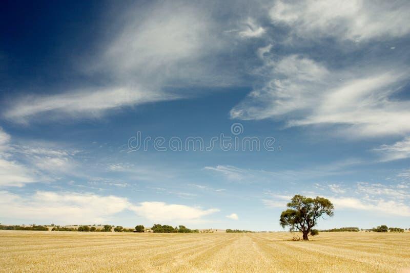 australier outback royaltyfri foto