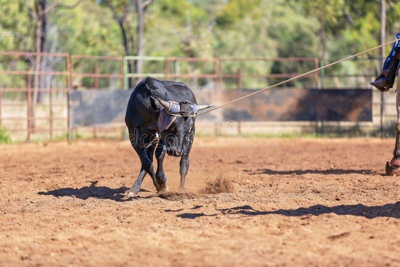Australier-Team Calf Roping At Country-Rodeo lizenzfreie stockbilder