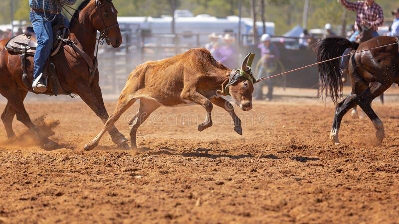 Australier Team Calf Roping Rodeo Event lizenzfreie stockfotos