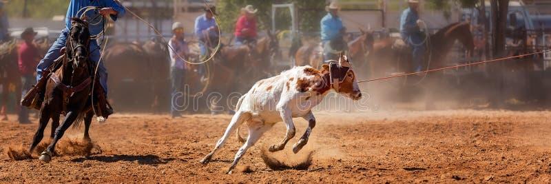Australier Team Calf Roping Rodeo Event stockbilder