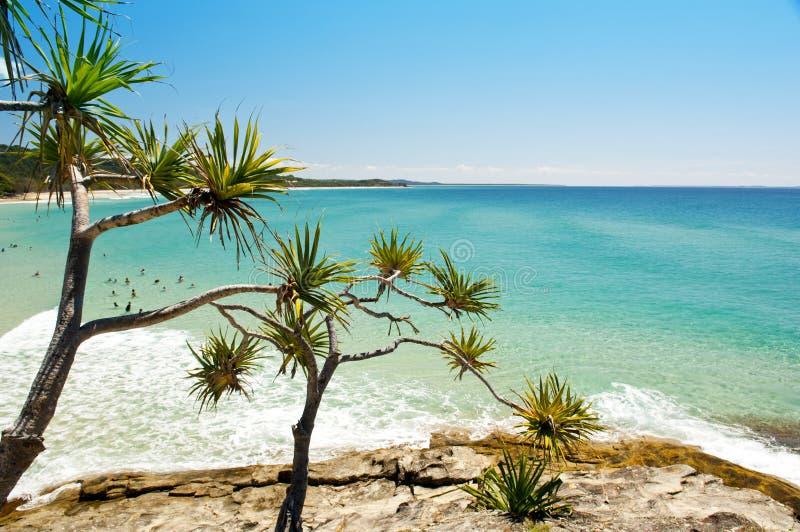 australijczyk plaża zdjęcie stock