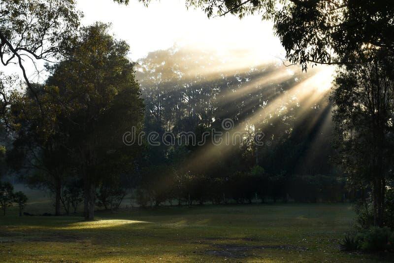 Australijczyka park z słońcem promienieje przez mgły obrazy royalty free