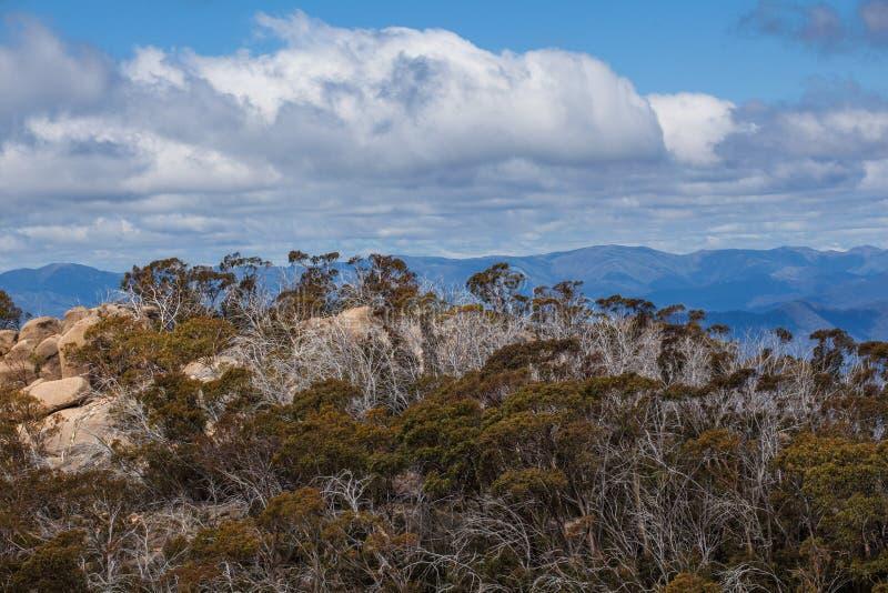 Australijscy Alps i Rodzimy Bush przy góra bizonu parkiem narodowym obraz stock