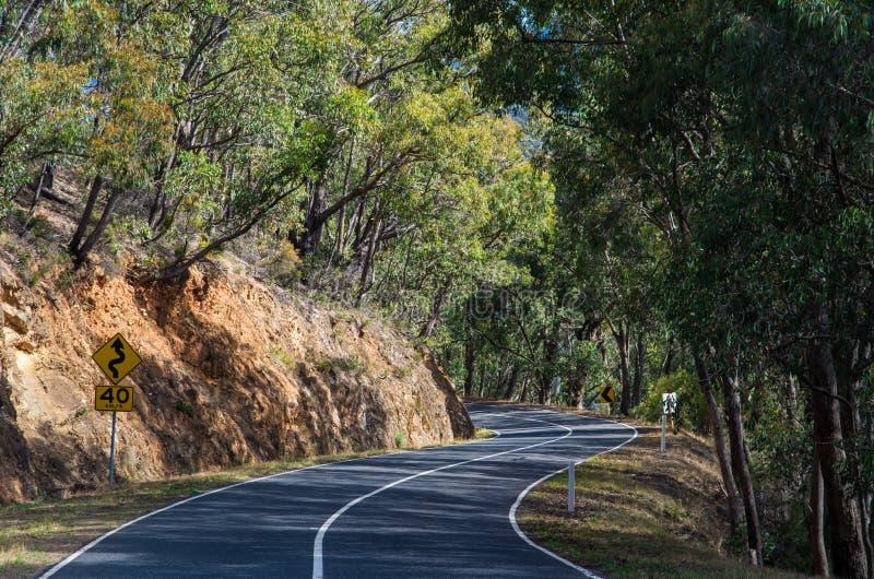 Australijska lasowa droga blisko Warburton, Wiktoria zdjęcia royalty free