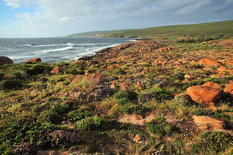 australijska linia brzegowa kwitnie western fotografia stock