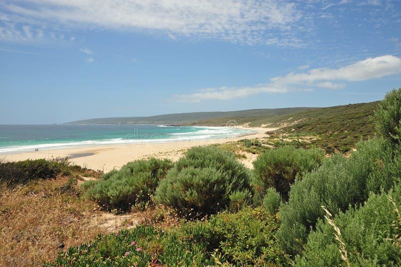 australijska linia brzegowa kwitnie western zdjęcia stock