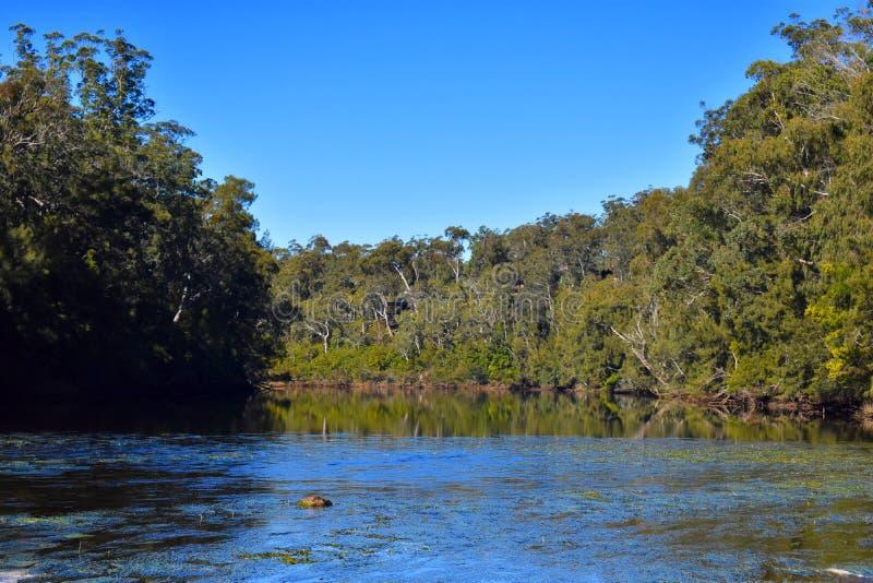 Australijska rzeka obraz royalty free