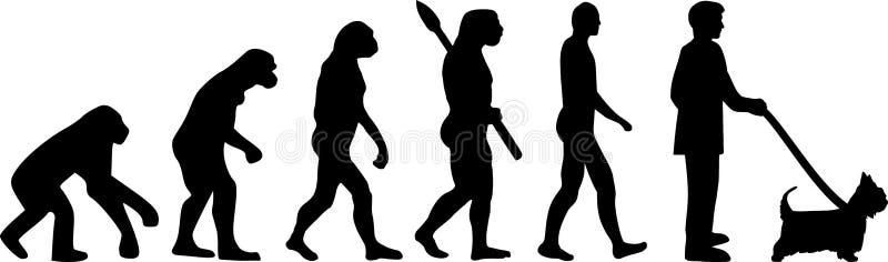 Australijska Silky Terrier ewolucji sylwetka ilustracji
