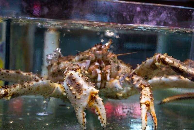 Download Australijski homar zdjęcie stock. Obraz złożonej z odżywczy - 106903344