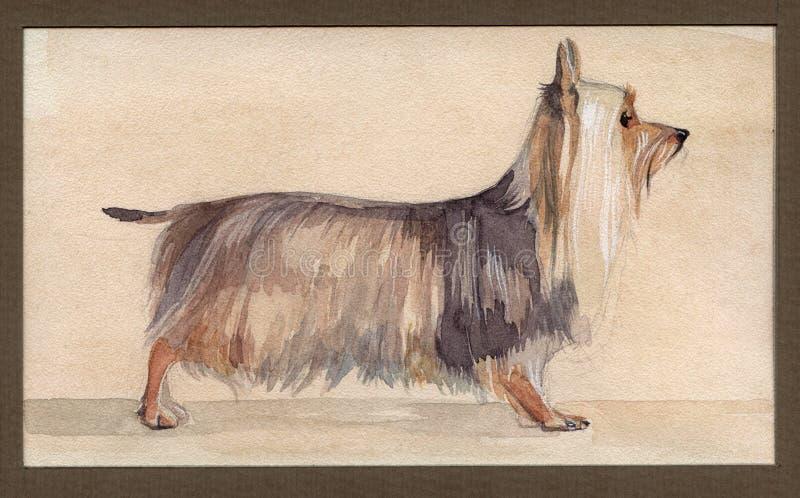 Australijski silky terier malował w akwareli w profilu zdjęcie stock