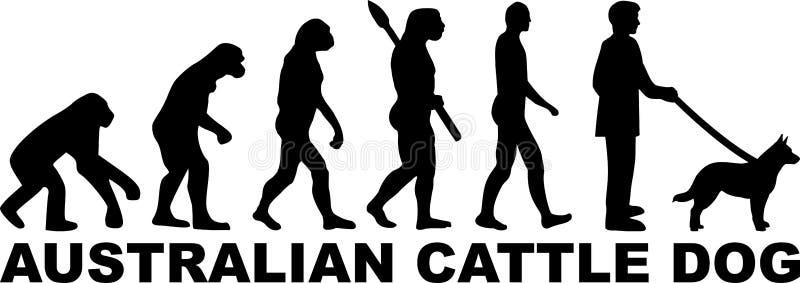 Australijskich byd?o Psia ewolucja z imieniem ilustracja wektor