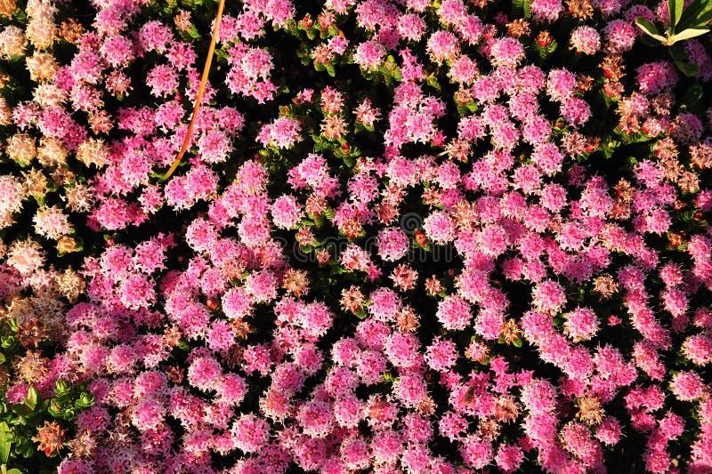 australijskie flory zdjęcie royalty free