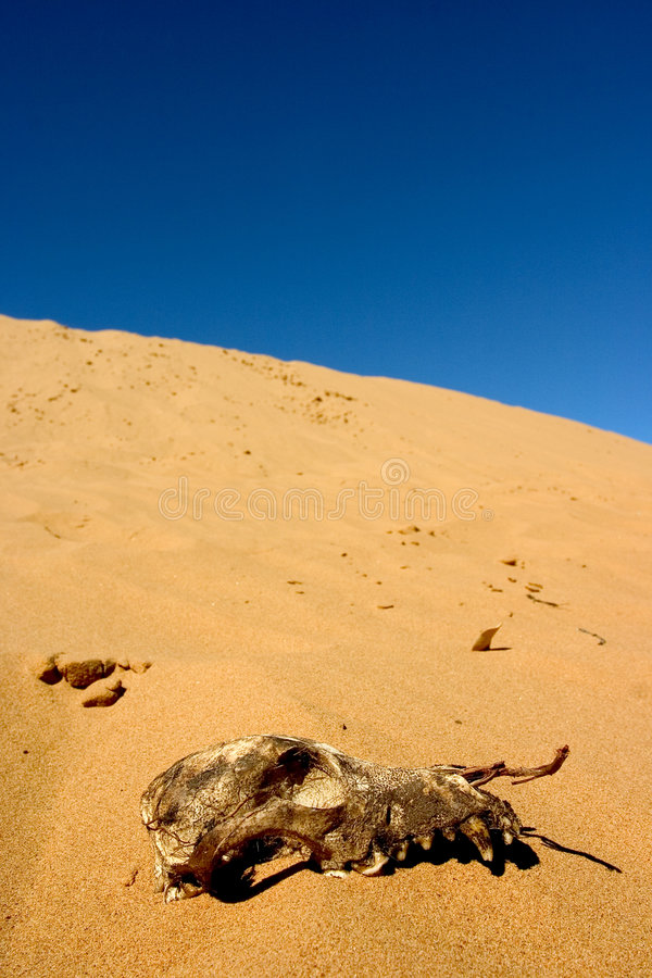 Download Australijskiego buszu obraz stock. Obraz złożonej z krajobraz - 144605