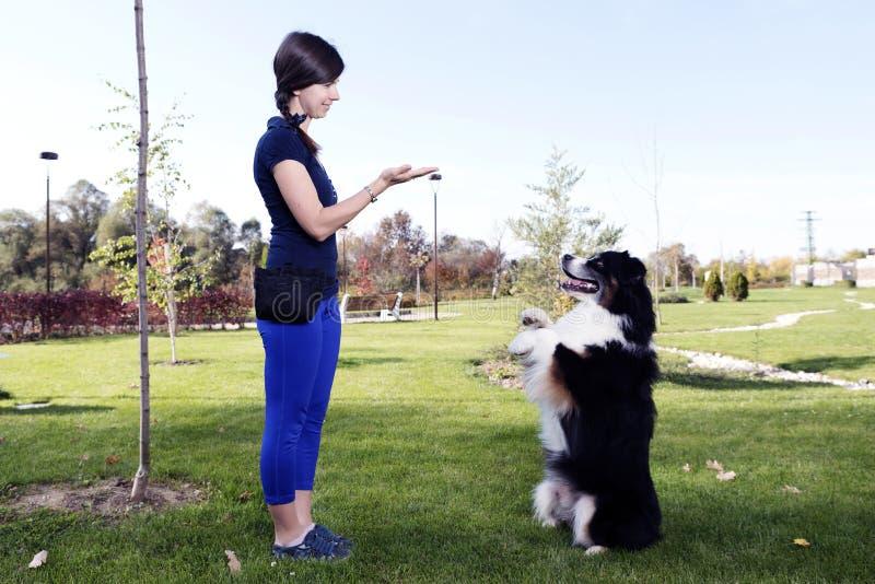 Australijskiego Pasterskiego szkolenie parka Psiego tresera zwierzęcia domowego Fachowy zwierzę fotografia stock