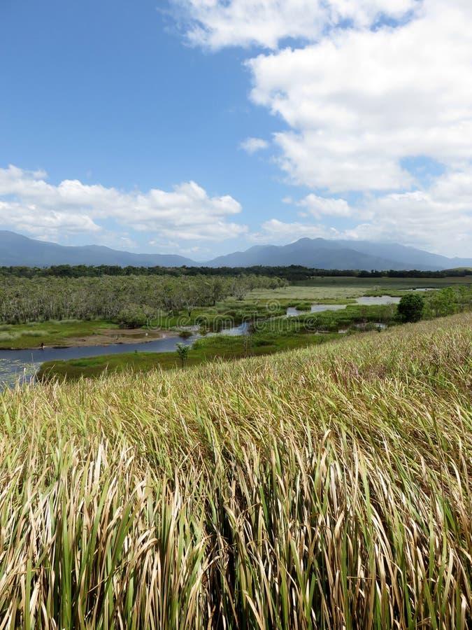 Australisch moerasland met blauwe hemel stock foto's