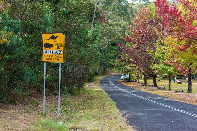 Australische Hinterlandstraße mit Verkehrsschild der wild lebenden Tiere voran lizenzfreie stockfotos