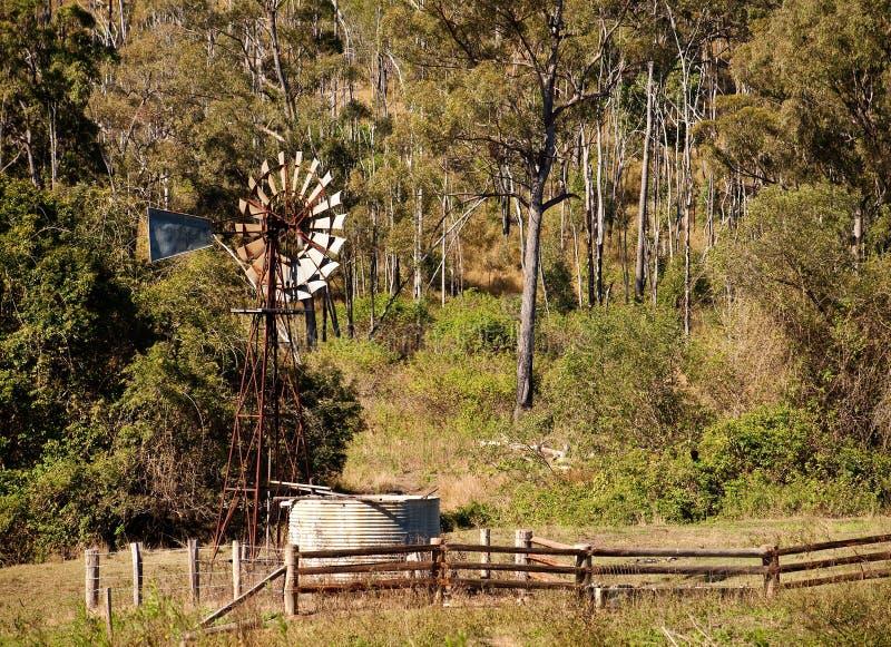 Australische Landschaft mit gumtrees und Windmühle lizenzfreies stockfoto
