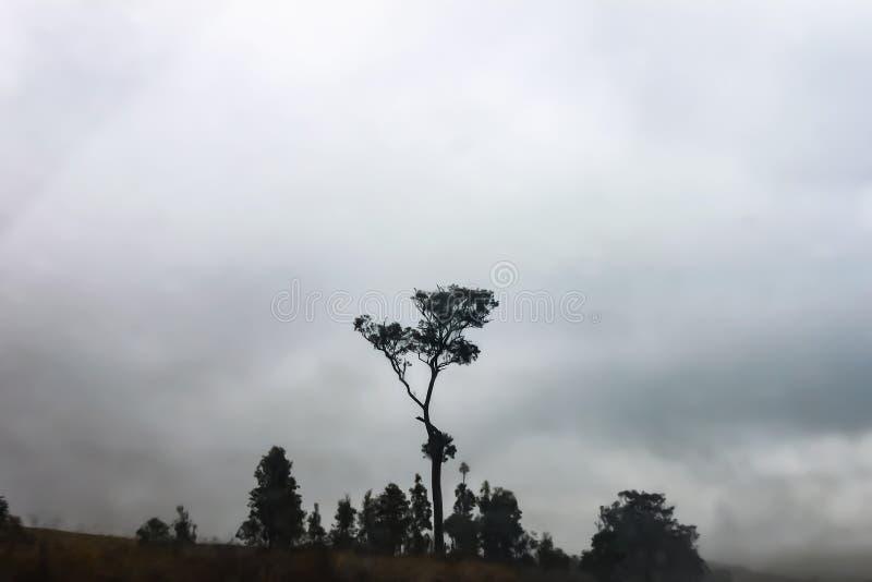 Australische scène in de mist - bijna zwart-wit beeld van een gomboom met andere kleinere die bomen in een diepe mist worden verl royalty-vrije stock foto