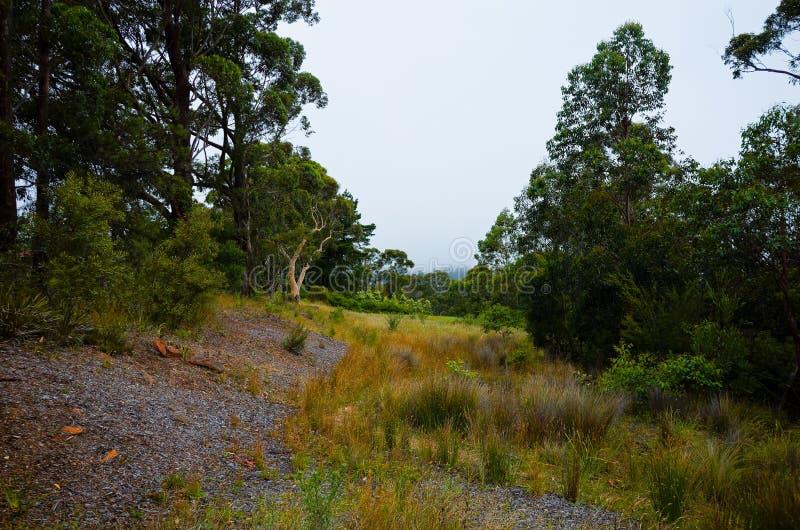 Australische Weide met Lang Gras royalty-vrije stock fotografie