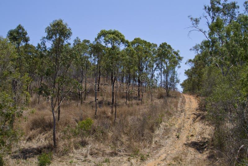 Australischer Busch lizenzfreies stockbild