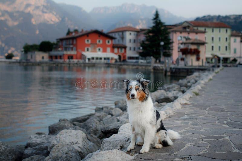 Australischer Schäfer am See in den Bergen Ferien mit Haustier Reisen mit einem Hund nach Italien stockfoto