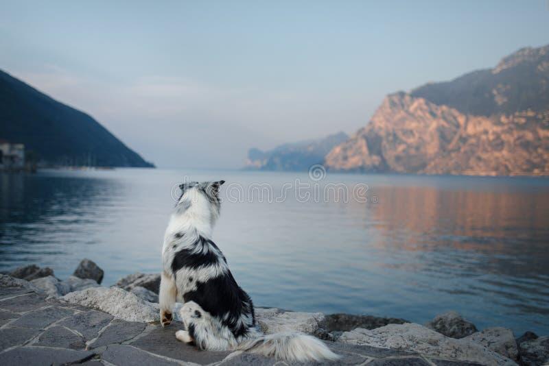 Australischer Schäfer am See in den Bergen Ferien mit Haustier Reisen mit einem Hund nach Italien lizenzfreies stockfoto