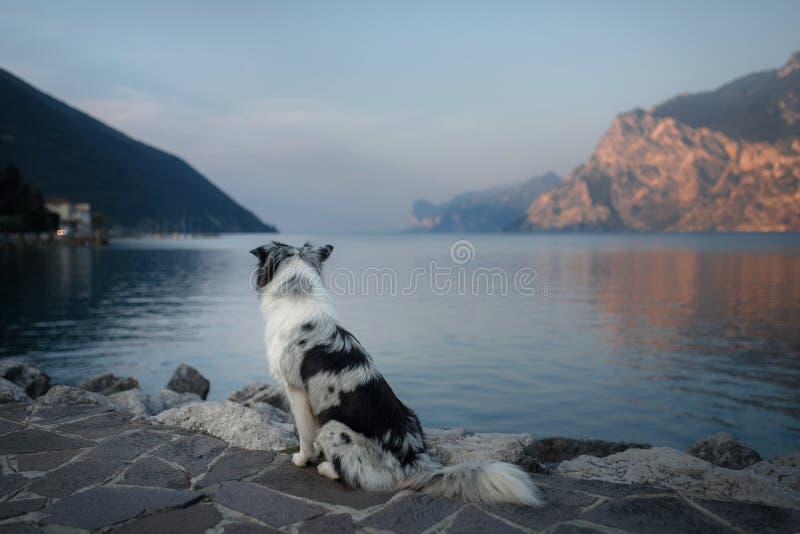 Australischer Schäfer am See in den Bergen Ferien mit Haustier Reisen mit einem Hund nach Italien lizenzfreie stockfotos