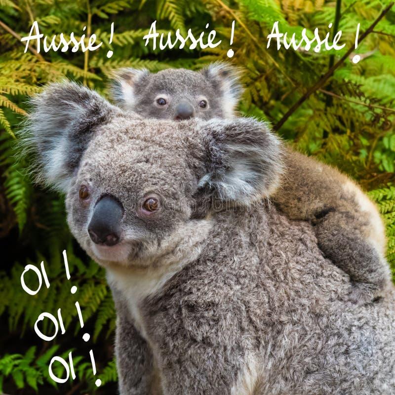 Australisches gebürtiges Tier des Koalabären mit Baby und australisch, australisch, australisch, Oi, Oi, Oi-Text lizenzfreie stockbilder