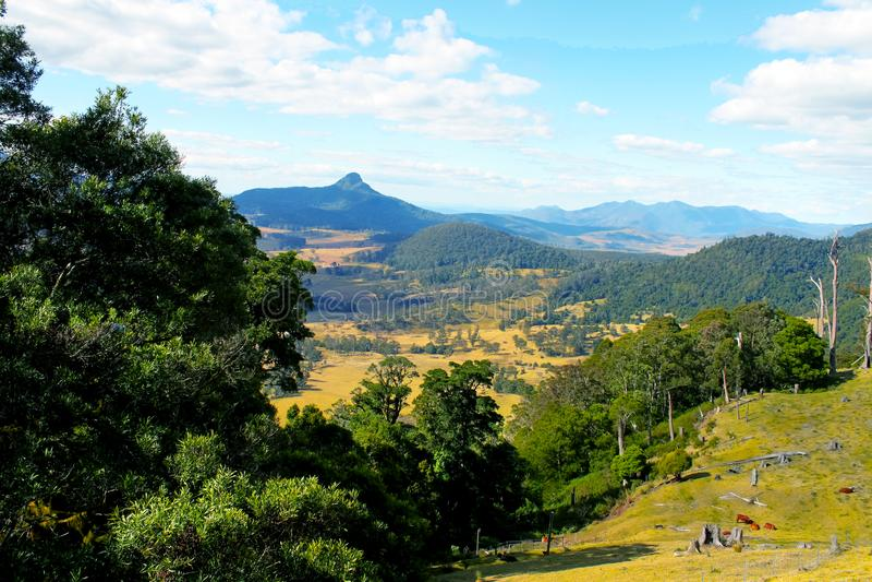 Australisches Hinterland mit blauem Mountians im Abstand und im Vieh, die unten in der Wiese unten weiden lassen stockfoto