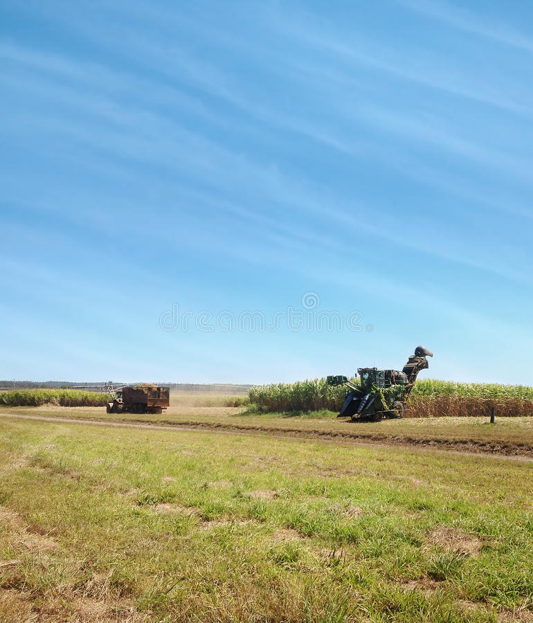 Australisches Landwirtschaftszuckerrohrernten lizenzfreies stockbild