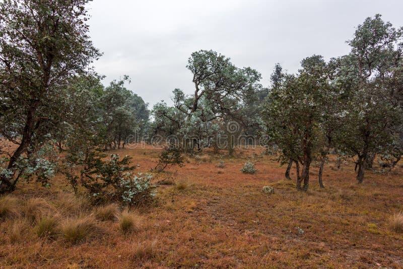 Australiskt bushlandlandskap fotografering för bildbyråer