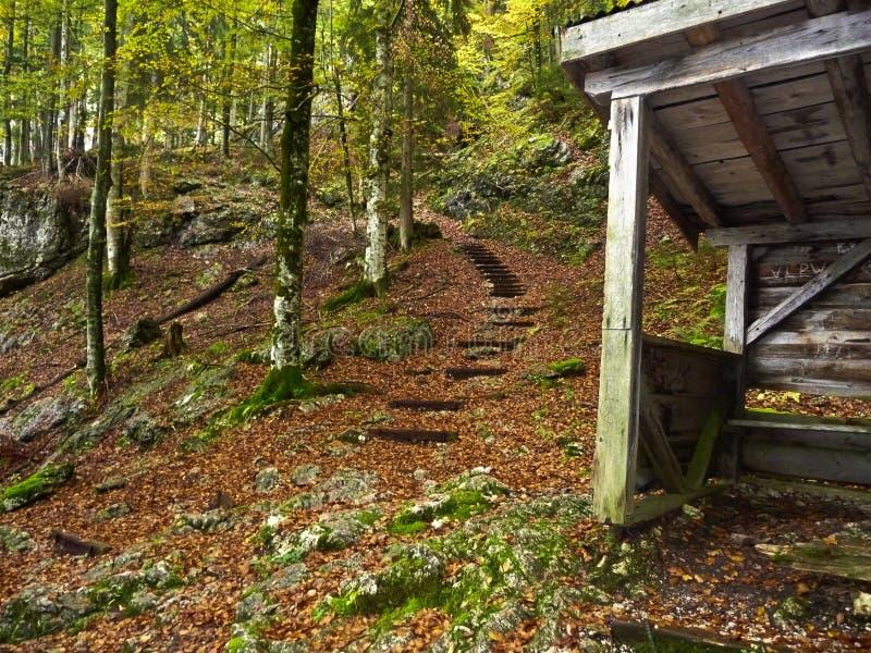 australites ορών Ξύλινο σπίτι για τη στήριξη το δασικό φθινόπωρο βουνών Κίτρινα δέντρα στοκ εικόνες με δικαίωμα ελεύθερης χρήσης