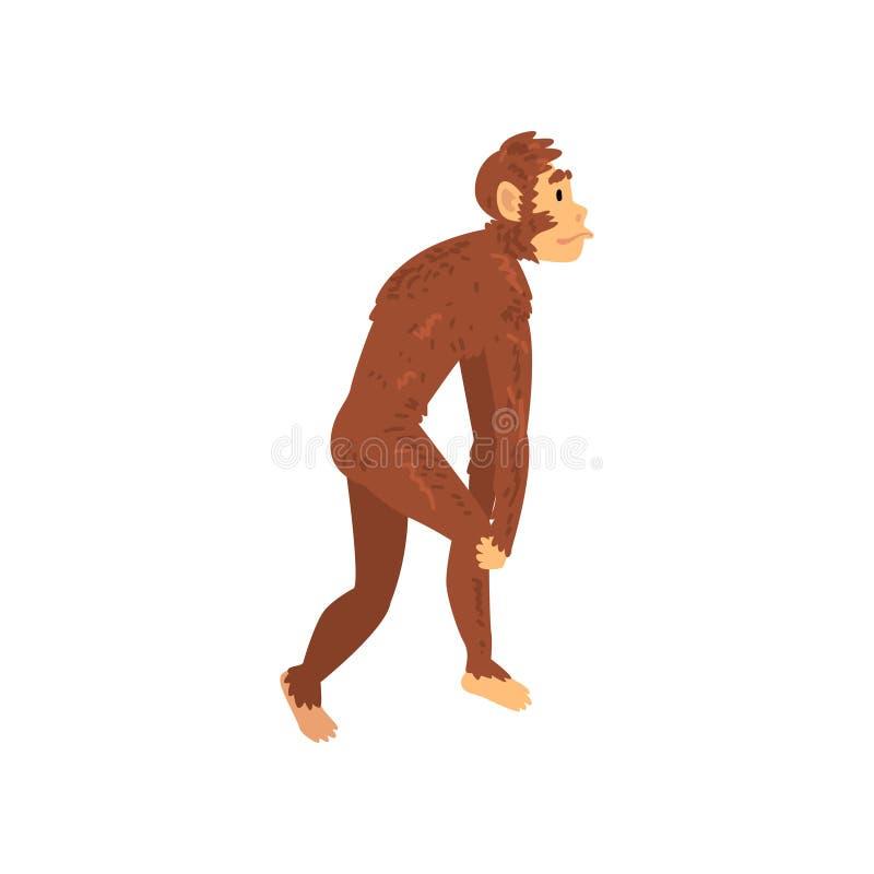 Australopithecus, Biologie-menschliche Entwicklungs-Stadium, Evolutionsprozess der Frauen-Vektor-Illustration stock abbildung
