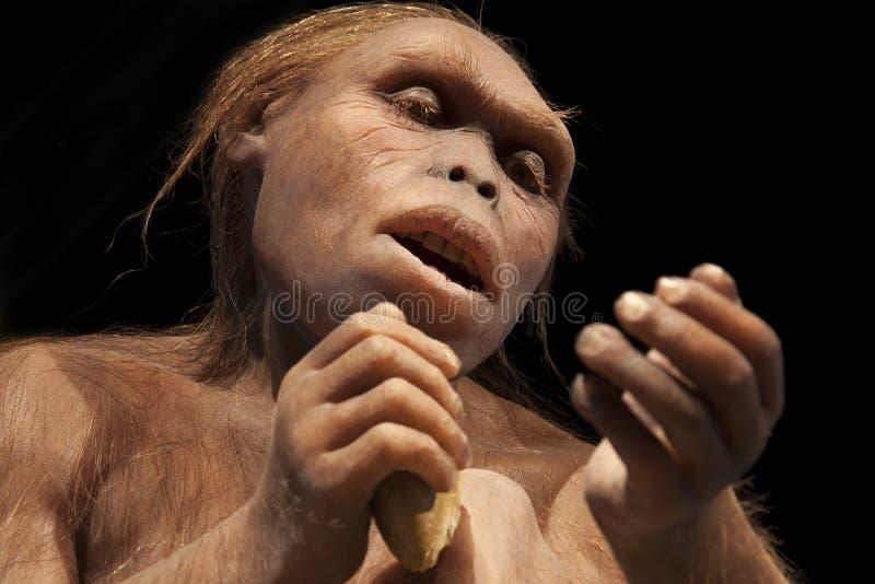 Australopithecusafarensis fotografering för bildbyråer