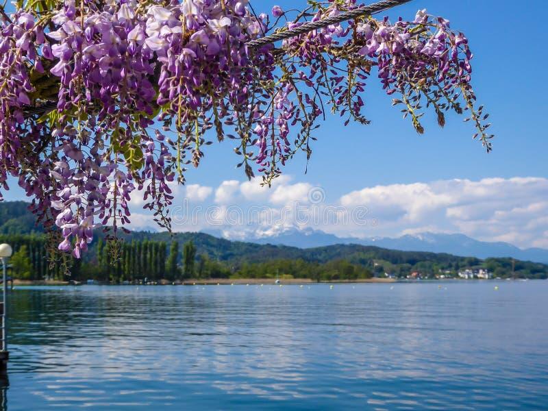 Austria - kwiecisty girlanda z jeziornym widokiem zdjęcia royalty free